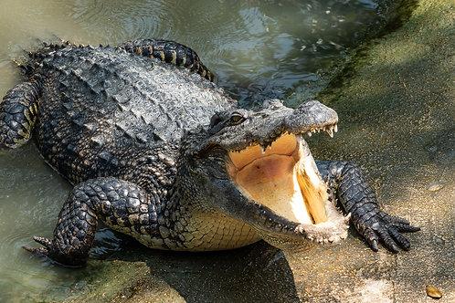Everglades Eco-Tour