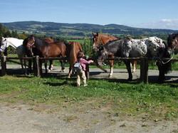 Pension Römerhof und Pferde