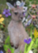 nature-Anika Graphics photos Harvey WA