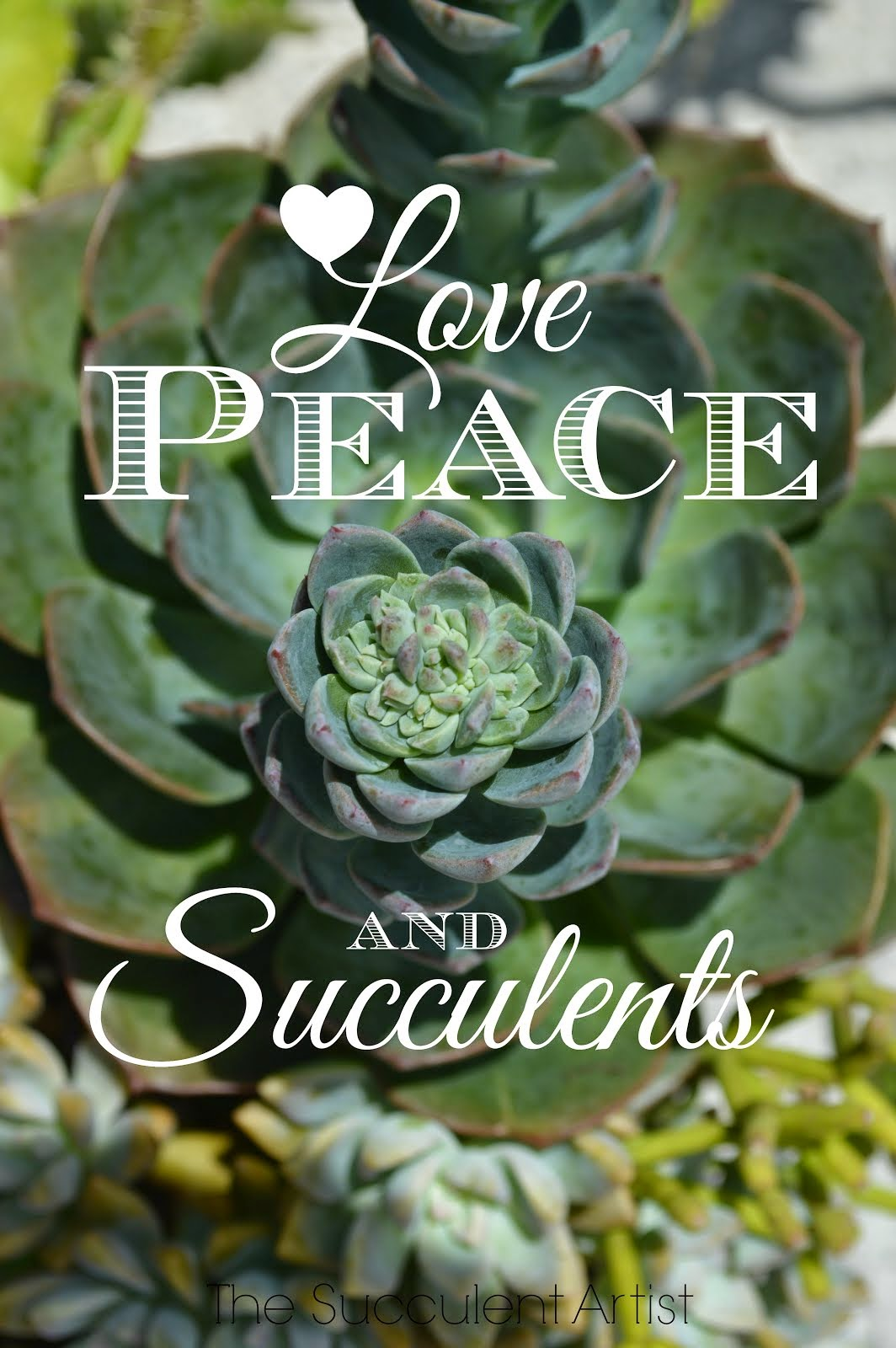 Love, Peace, and Succulents - Keep Calm and Garden On! - I LOVE Succulents photo - Succulents and ca