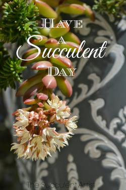 Have a Succulent Day - I LOVE Succulents photo - Succulents and cacti oh my!- photography by Catheri