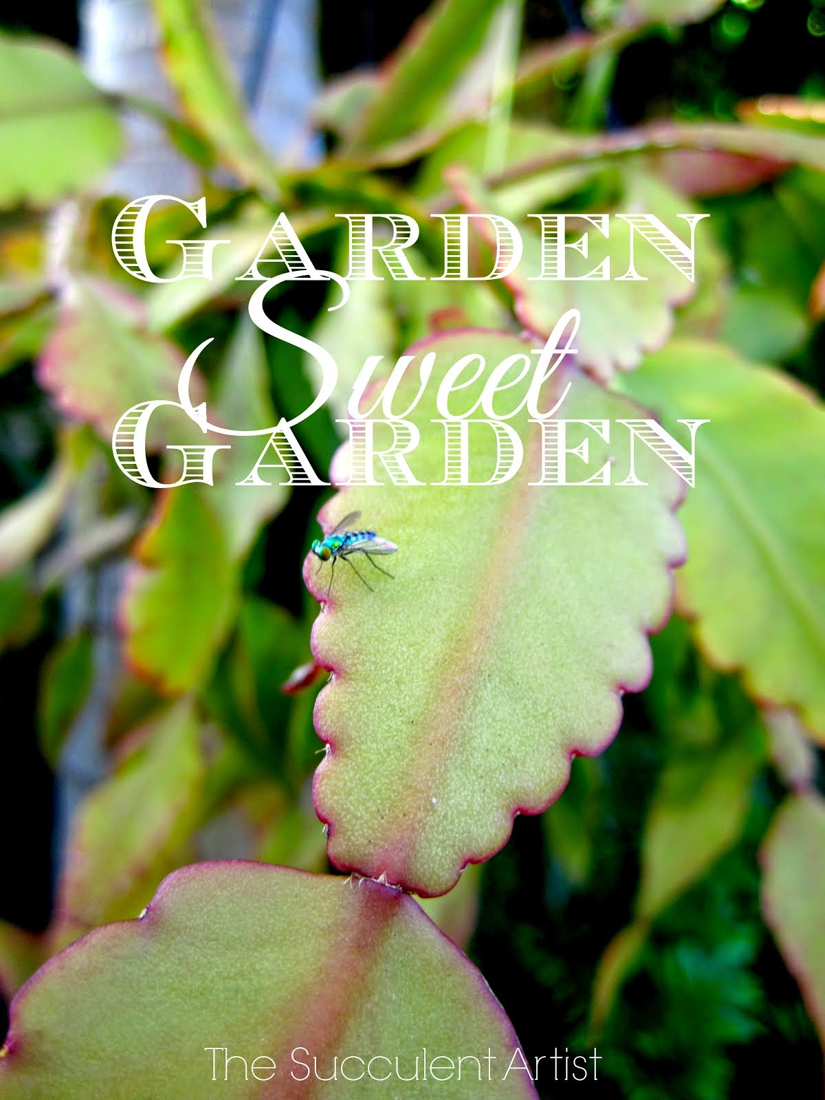 Garden Sweet Garden - All You Need is a Garden - I LOVE Succulents photo - Succulents and cacti oh m