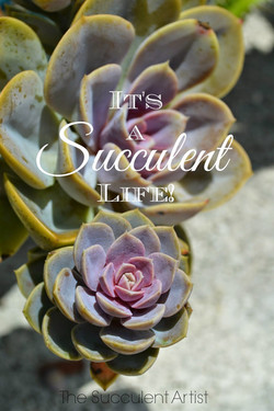 It's a Succulent Life! - I LOVE Succulents photo - Succulents and cacti oh my!- photography by Cathe