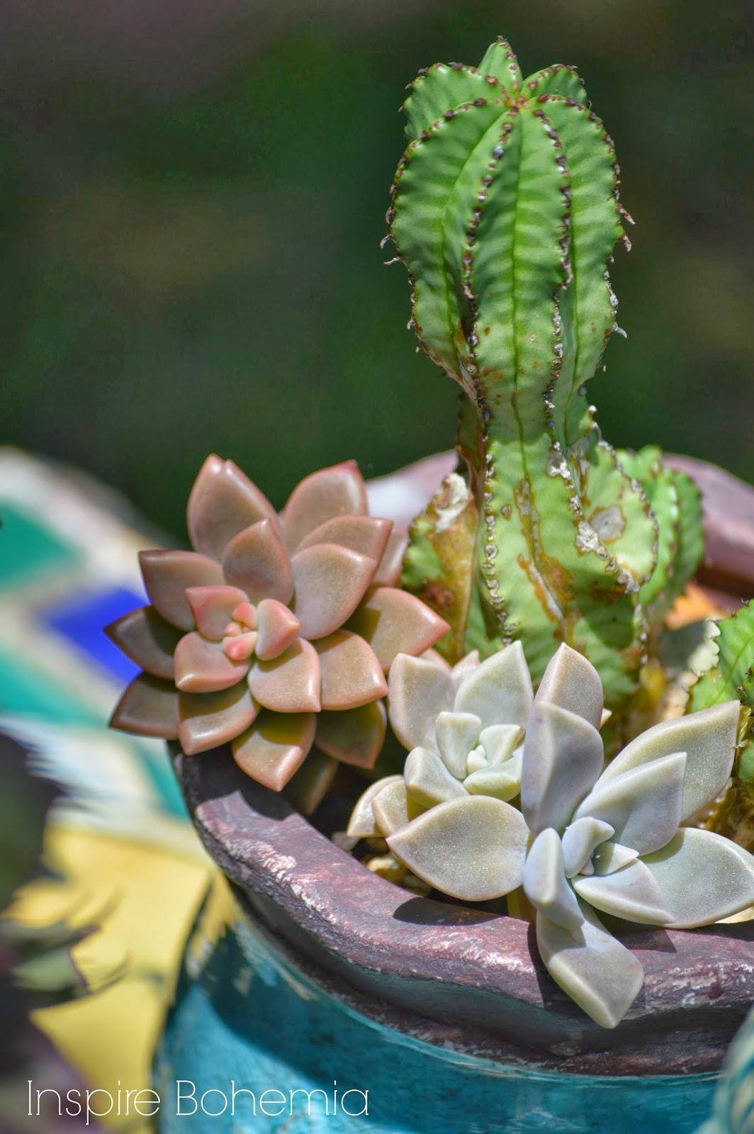 succulents and cacti-gardening-InspireBohemia.com - watermarked-