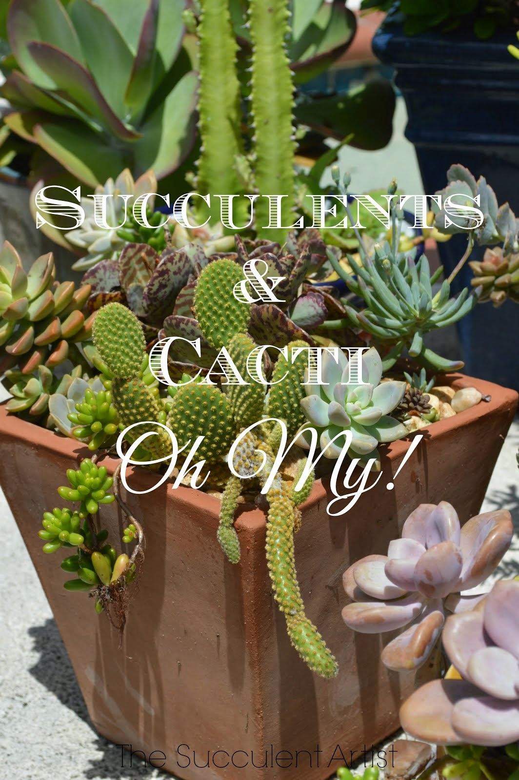 I LOVE Succulents photo - Succulents and cacti oh my!- photography by Catherine of Inspire Bohemia a