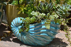 My Garden - Gardening - Succulents - Cacti - Cactus - planters - think outside the box - The Succule