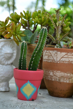 Mini Cactus Planter - painted terracotta pot - cactus - cacti - Garden photography by Catherine of I