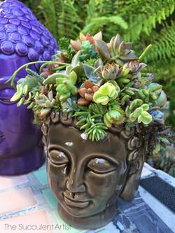 Buddha Succulent Planter - Buddha head - succulent planter - cactus - cacti - succulent and cacti pl