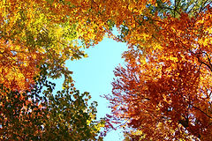 Bäume1.jpg