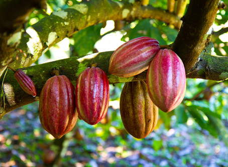 Five little known facts about the chocolate origin