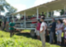 Visite guidée et tourisme guadeloupe bananeraie, plantation grand café en guadeloupe