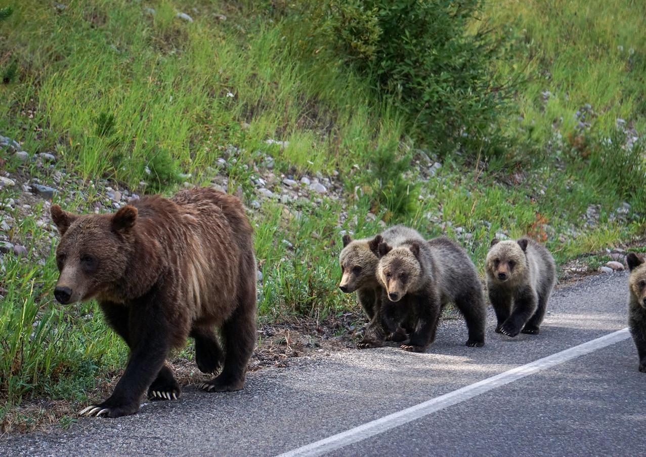 bear-family.jpg