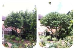tree surgeon nottingham