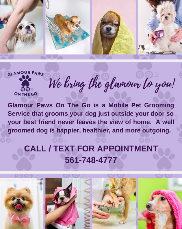 Glamour Paws On The Go