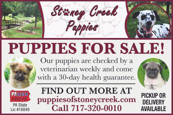 Stoney Creek Puppies.jpg