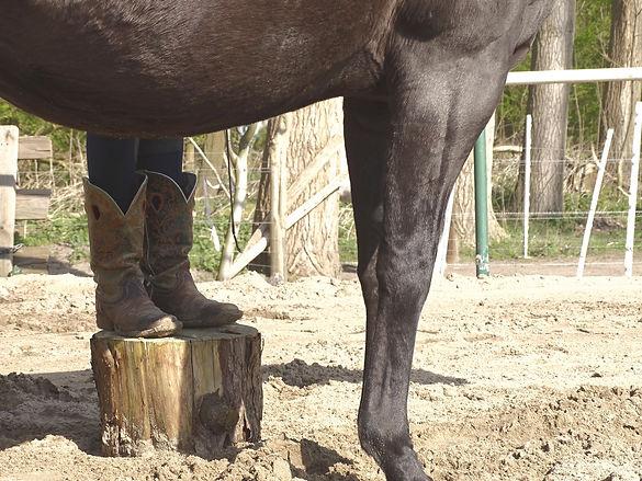 Paard, paardenlaarzen, Lisa, Renkse, KuddWerk, kuddwerk.