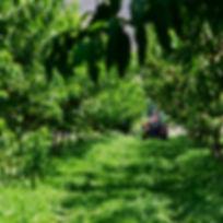BC Organic Wholesale, Organic Wholesale Fruit, Organic Wholesale Vegetables, Cawston, British Columbia, BC, Cawston BC,  Organic Cawston, Organic BC, Sustainable Farming, Organic Wine, Organic Cider, Organic Fruit, Organic Vegetables, Organic Farming, Sustainable Farming, Family Farming, Family Farm, Generation Farming, Okanagan, Organic Okanagan, Similkameen, Organic Similkameen, Harkers, Harkers Organics, Fruit Stand, Choose Organic