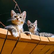 Cats 1.jpg