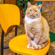 Cats 12.jpg