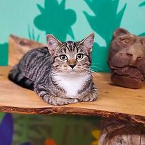 Cats 17.jpg
