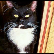 Cats 18.1.jpg