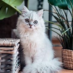 MDCC - Cat Photo 1.jpg