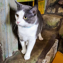 Cats 23.jpg
