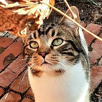 Cats 20.jpg