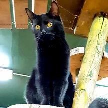 Cats 19.jpg