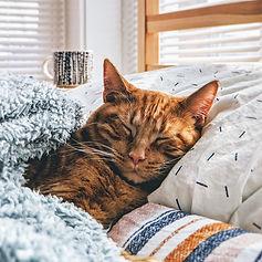 MDCC - Cat Photo 14.jpg