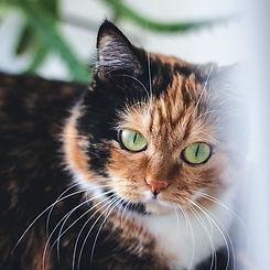 MDCC - Cat Photo 4.jpg