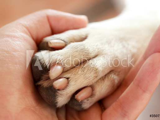 Caring for your dogs sensitive paws.
