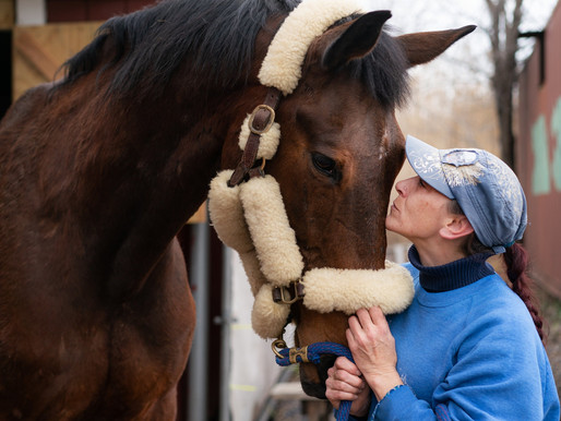 A Riding Center for the Disabled Struggles to Care for Its Herd