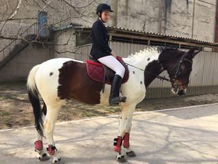 Краевые соревнования по конному спорту