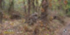 field_ls_2.jpg