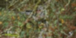 field_es_2.jpg