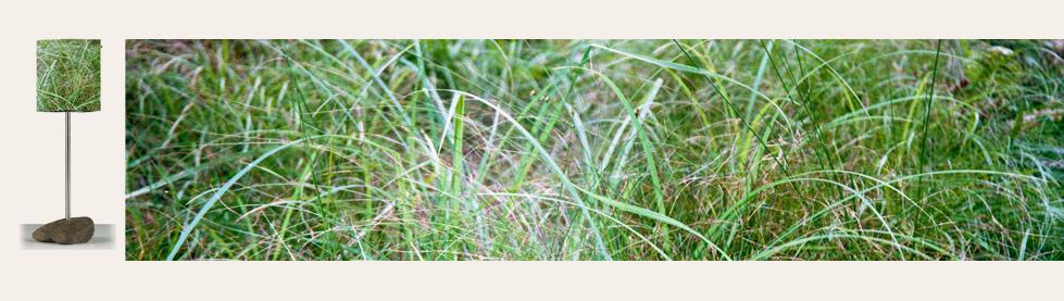 06_Petite_herbes hautes+Aplat.png