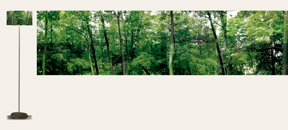 15_Grande_arbres+Aplat.png