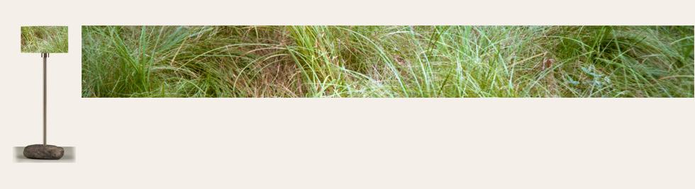 05_Petite_herbe+Aplat.png