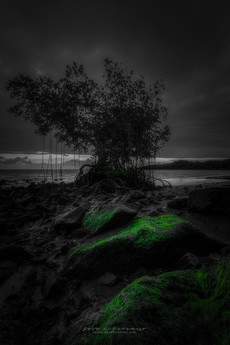 Waiahole Green