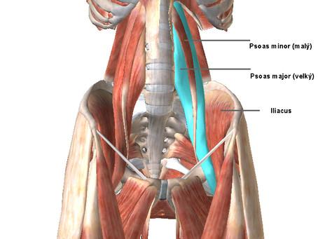 PSOAS - emocionální sval