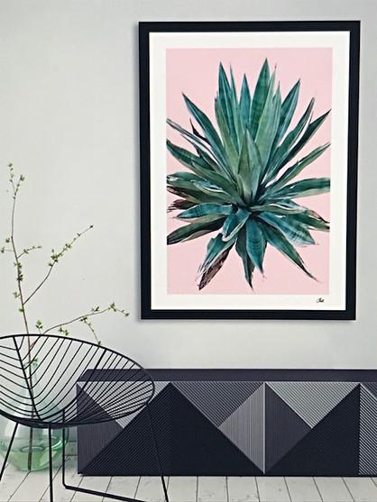 Desert Plants Collection