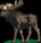 moose-2367114_960_720.png