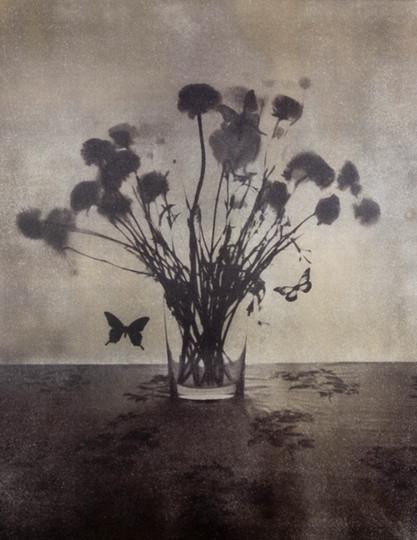 Ranunculus van dykebrown print 35*27cm  2011