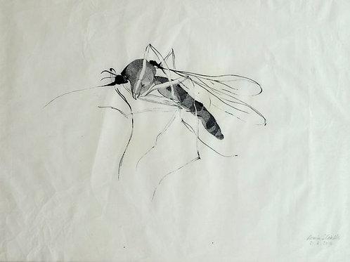 Le moustique 1