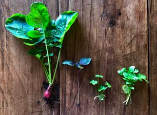 DIY herb & veg tray