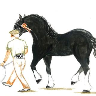 Rural Illustrations