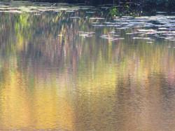 Albert's Pond Reflection
