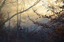 Woodland Misty Morning Sun Rays