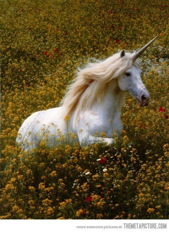 Unicorns:Photo Demo.jpg